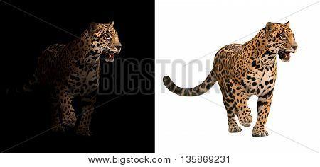 Jaguar On Black And White Background