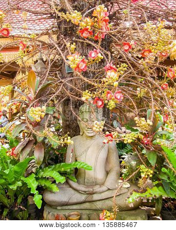 Pentacme Siamensis plant and Buddha sculpture seen in Cambodia