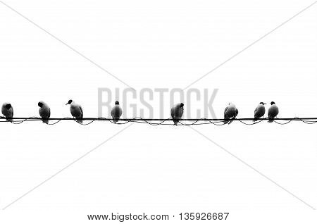 A row of eight pigeons are sitting on an electrical wire that bisects the sky into two sections.