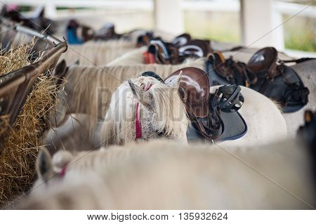 white equipped horses with saddles at ranch
