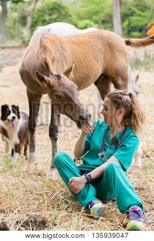 Female Veterinarian performing a check up of a young horse