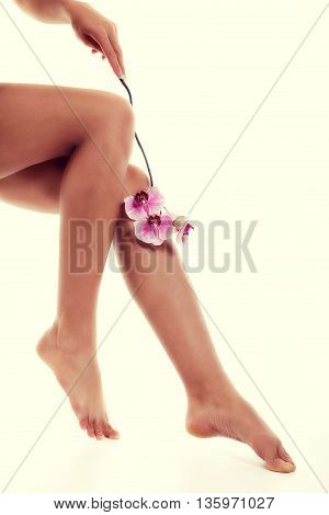 Female Legs With Pink Orchid On White Background