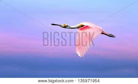 Bright sky on sunset or sunrise with pink bird natural background environment or ecology concept