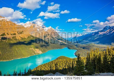 Turquoise Lake Peyto in Banff National Park, Canada. Mountain Lake as a