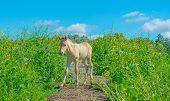 Foal in a meadow in wetland in spring poster