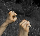 Coloured tortured hands grasping desperately barbed wire on black and white background poster