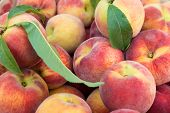 Large juicy peaches. Background from peach fruit with a velvety skin. Useful dietary and vegetarian food. The gifts of nature vitamin. Peaches are delicate and fresh. poster