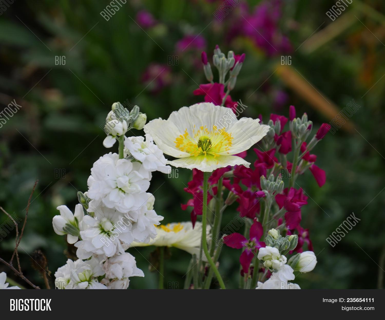 Close White Flower Image Photo Free Trial Bigstock
