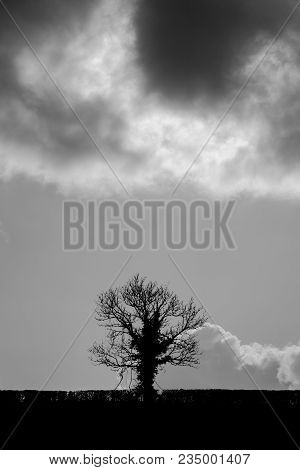 Silhouetted Oak Tree (quercus Sp.) Against Powerful Sky. Black And White Tree In Front Of Clouds In
