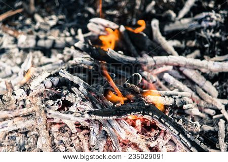 Embers Of A Burnt-out Fire. A Fire In The Woods, Barbecue.