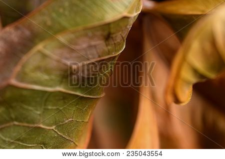 Leaves Close Up Image As Artistic Nature Background. Selective Focus On Foreground.