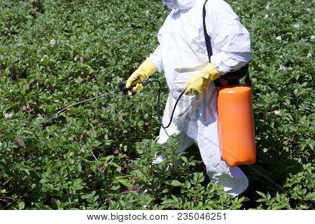Farmer Spraying Pesticides. Non Organic Vegetables. Pollution.
