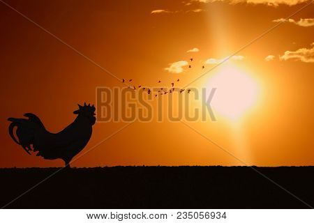 Silhouette Of Rooster Crowing Stand On Field In The Morning With Sunrise And Group Of Birds On Backg
