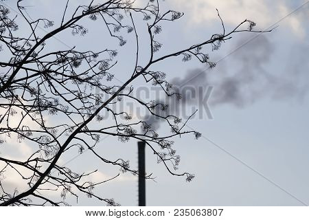 Ecology Harm. A Fuming Pipe Through Withered Branches.