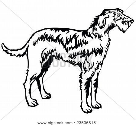 Decorative Portrait Of Standing In Profile Irish Wolfhound, Vector Isolated Illustration In Black Co