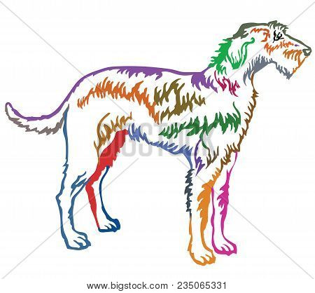 Colorful Contour Decorative Portrait Of Standing In Profile Irish Wolfhound, Vector Isolated Illustr
