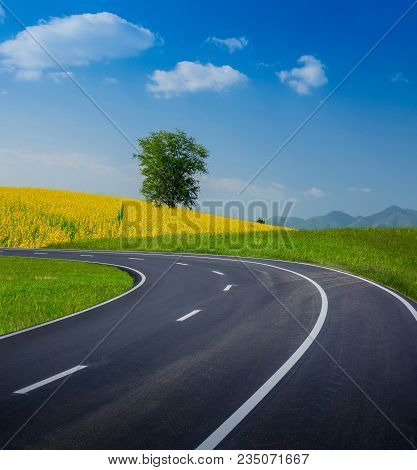 Empty Curved Road On Green Grass With Tree