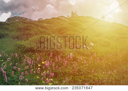 Mountain Landscape  With Flawer And Sunset  In Valsabbia, Brescia, Italy.