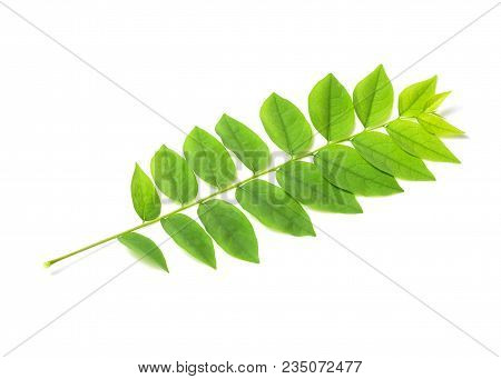 Close Up Green Star Gooseberry Leaf Isolated On White Background.