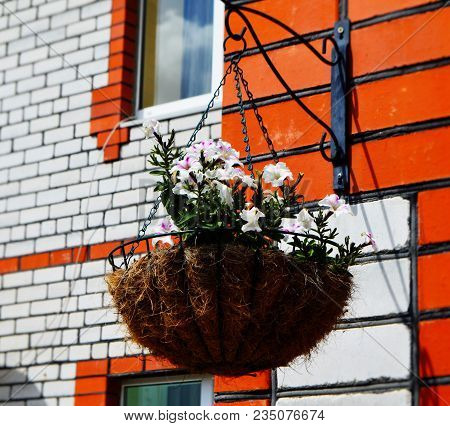 Colourful White Petunia In Hanging Pot Made From Hay. Hanging Flower Pot With White Petunias (petuni