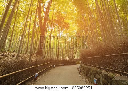 Walking Path Into Bamboo Forest, Japan Natural Landscape Background