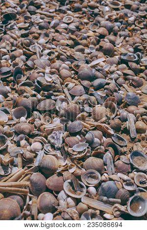 Seashells On Sand Background. Macro View Of Many Different Seashells As Background. Seashells Piled