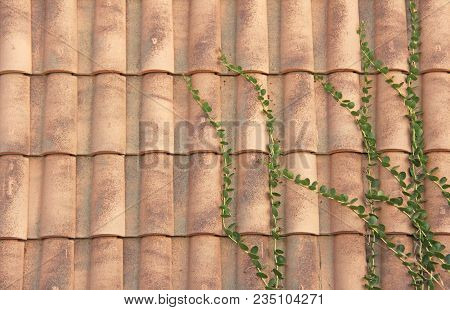 Roof Of Tiles. Terracotta Old Tiles. Beige Background From Tiles. Tile Roof.