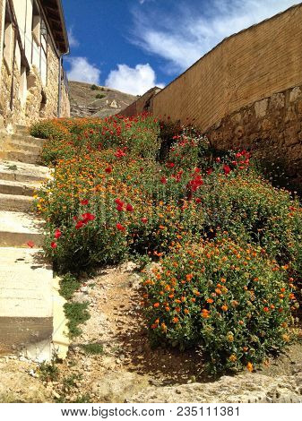 Red And Orange Flowers On Old Concrete Stairs In Castille Leon, Spain