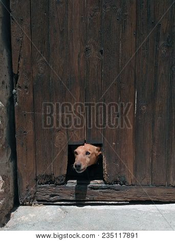 Dog Poking His Head Through A Hole In A Wooden Door