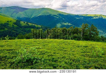 Beautiful Green Hills Of Borzhava Mountain Ridge. Lovely Landscape On A Cloudy Day