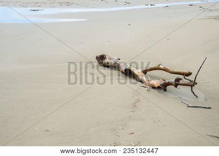Piece Of Driftwood On A Sandy Ocean Beach