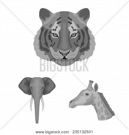 Wild Animal Monochrome Icons In Set Collection For Design. Mammal And Bird Vector Symbol Stock  Illu