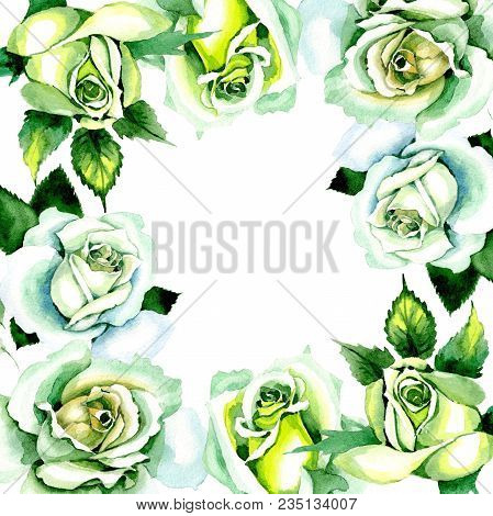 Whit Roses. Floral Botanical Flower. Wild Spring Leaf Wildflower Frame. Aquarelle Wildflower For Bac
