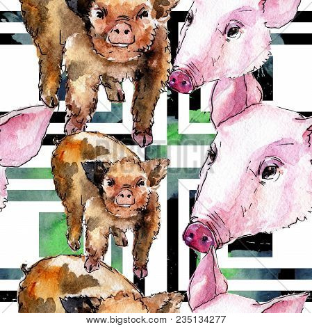 Pig Wild Animal In A Watercolor Style Pattern. Full Name Of The Animal: Pig. Aquarelle Wild Animal F