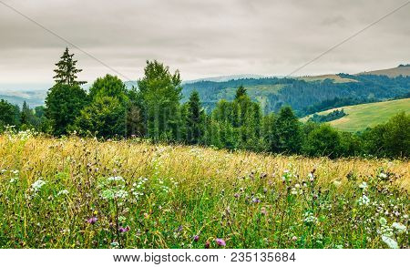 Grassy Meadow On Forested Hill. Lovely Nature Scenery On An Overcast Day In Summer
