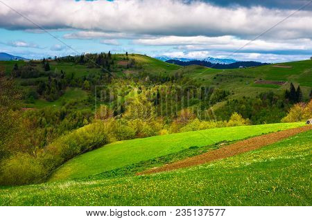 Agricultural Field On A Grassy Hill. Beautiful Rural Scenery Of Carpathian Mountains On A Cloudy Day