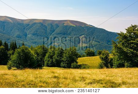 Beech Forest On Grassy Meadows In Mountains. Beautiful Landscape At The Foot Of Carpathian Mountain