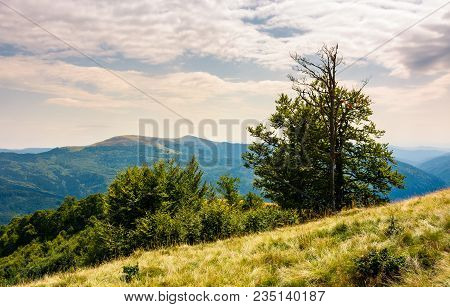 Tree On The Grassy Hillside On A Cloudy Day. Lovely Summer Landscape Of Carpathian Mountain Svydovet