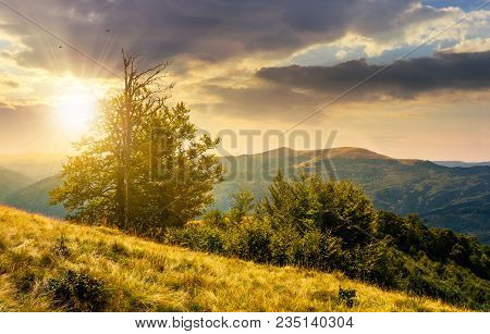 Tree On The Grassy Hillside On At Sunset. Lovely Summer Landscape Of Carpathian Mountain Svydovets R