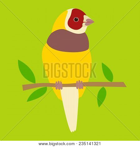 Yellow Cardinal Vector Illustration Flat Style  Front  Side