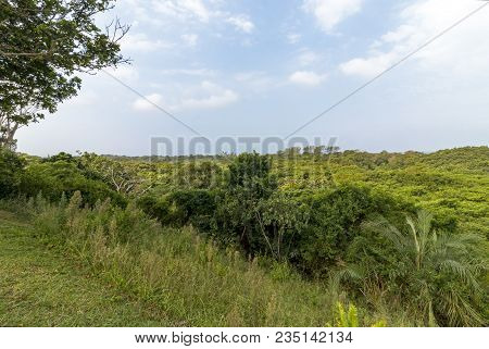 Natural green wetland vegetation against Lake St Lucia and blue skyline at iSimangaliso Wetland Park
