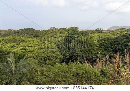 Trees And Wetland Vegetation And The Saint Lucia Estuary