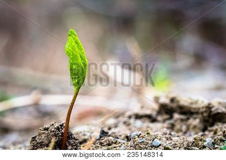 A Tiny Green Plant Growing Up From Earth