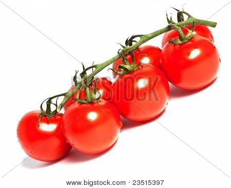 Red Cherry Tomato Branch