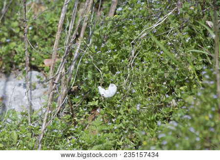 Bee Hovering Around And Pollinating A White Flower