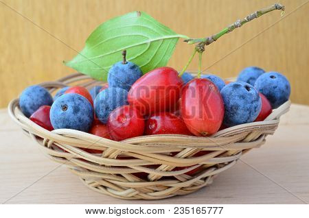 Mixed Nutritive And Curative, Fresh And Ripe Cornus Mas And Blackthorn Or Sloe Berries In A Wicker B