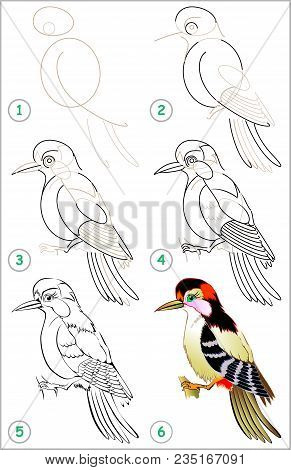 Page Shows How To Learn Step By Step To Draw A Woodpecker. Developing Children Skills For Drawing An