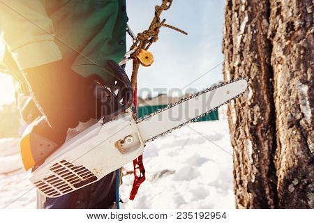 Chainsaw. Male Professional Woodcutter Looks At Tree To Assess How To Cut Tree At Height.