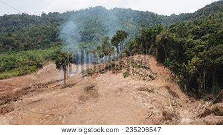 Deforestation. Environmental destruction of rainforest. Borneo forest destroyed for oil palm plantations