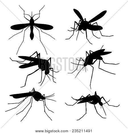 Closeup Mosquito Silhouettes Isolated. Flying Macro Mosquitoes Vector Set. Illustration Of Insect Mo